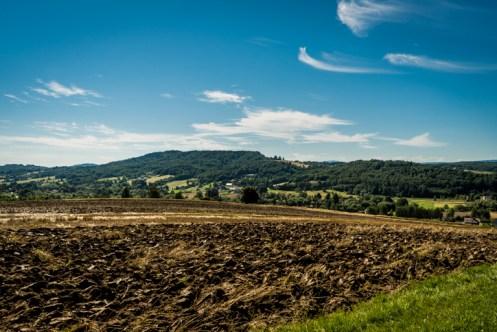 Rekonensans terenowy dotyczący przebiegu i zaawansowania prac związanych ze zbiorem zbóż - 28 lipca 2020 r. - fot. Andrzej Famielec - Kalwaria 24 -02428
