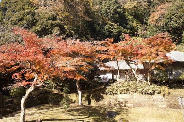 妙香池の紅葉。