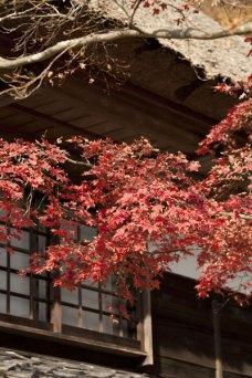 海蔵寺の紅葉。梵鐘の側にある茅葺きに紅葉がかかります。