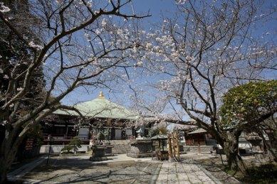 桜の季節にはぜひ訪れたい場所です。