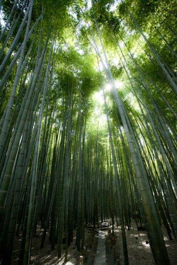 ぜひ竹林もどうぞ。梅と竹、梅は直線の竹をより魅力的にします。