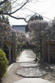 宝戒寺入口の門。門を入ると左右に梅の木が並びます。