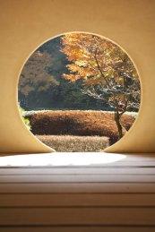 明月院本堂から後庭園を望む明月院の象徴的な景色。