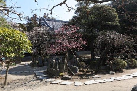 百観音石像と梅。中央あたりに3、4本が咲きます。