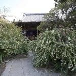 宝戒寺は萩寺ともいわれます。秋に入った9月上旬~下旬まで境内は萩に覆われます。