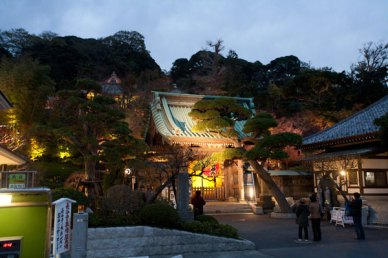 長谷寺の全景。ライトアップ期のものです。