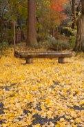 紅葉と銀杏の落葉に囲まれて一服してはいかがでしょうか。