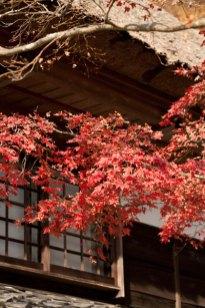 梵鐘のあたりにある紅葉。