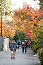 参道の紅葉が迎えてくれます。