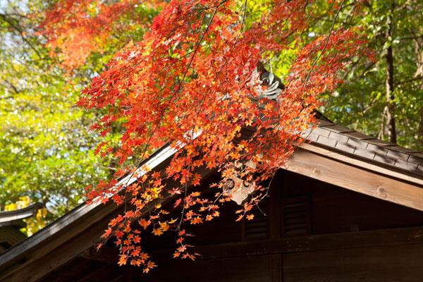 宝物殿の辺りもよく紅葉しています。
