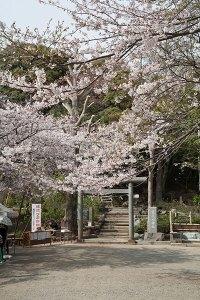 最も賑わう春の葛原岡神社周辺。