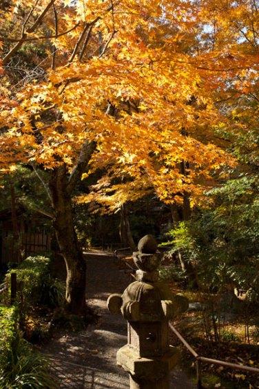 山門を入ってすぐ。紅葉で埋まっています。