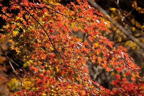 祇園山ハイキングコースへと向かう祖師堂左手の道から。