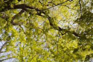 ここに来るのは春が一番好きです。新緑が鮮やかです。