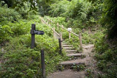 次の標識です。正面の階段が大仏切通し、右の小道は葛原岡・大仏ハイキングコースへと向かう道です。ここははっきり標識があるので、間違えることはないと思います。