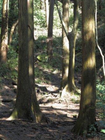 天園ハイキングコース瑞泉寺〜獅子舞上合流地点間。急な上りになります。この後、貝吹き地藏があります。