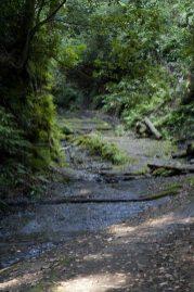 〔地図⑤〕山道に入ると空気もぐっと清々しくなります。