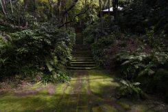 妙法寺、苔の石段。ここに立つことは、歴史と自然の静寂を感じる至福の時です。