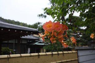 満昌寺境内の凌霄花(ノウゼンカズラ)。夏に咲きます。静かな境内に鮮やかなノウゼンカズラが映えます。