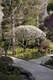 報国寺の梅。竹林の直線美と丸く剪定された梅の弧の美しさが対称を成しています。