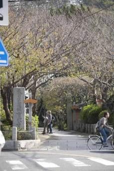 〈王道〉金沢街道をゆく。段葛を抜けると鶴岡八幡宮三ノ鳥居前の交差点を右に曲がって進むと宝戒寺が見えてきます。桜、梅、萩の名所です。