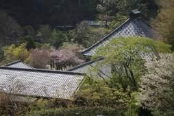 光則寺、日朗の土牢から境内を望みます。この景色はなかなか。