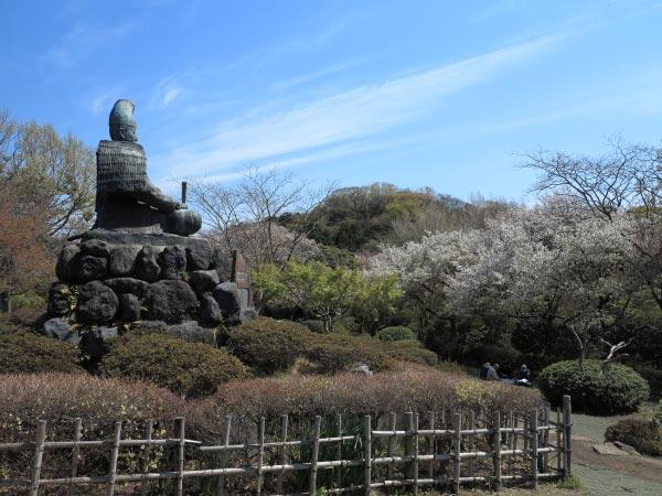 源氏山公園の桜は源頼朝像の眼前、左右広い範囲に咲きます。
