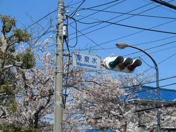 ハイランドの桜。明石橋から上がってくるとこの「東泉水」信号があります。真っすぐ走ると線路にぶつかるまで桜が続きます。東泉水信号を右に曲がると桜並木が続き、桜と富士が見られる富士見の公園に出られます。