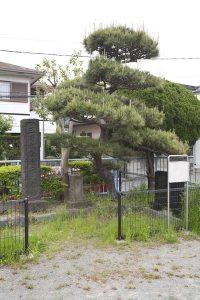 三浦大介腹切の松。公園に柵がつくられ史跡となっています。