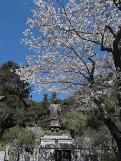 妙本寺、日蓮像と桜。