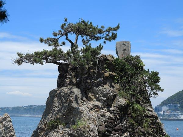 飛柏槙(ビビャクシン)に向かう途中からみる千貫松。傍らの石碑がとても美しい様をしています。