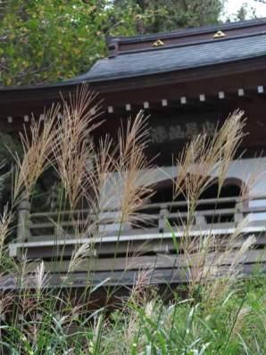 浄智寺のススキ。萩ととなりあっています。