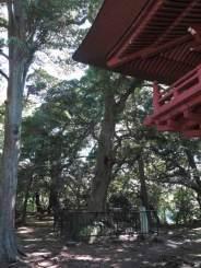 神武寺境内、薬師堂前にある「なんじゃもんじゃの木」。樹高は20m、樹齢は推定400年。