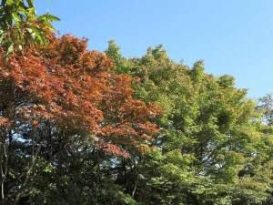 2014年10月28日、源氏山公園、大仏ハイキングコース側。