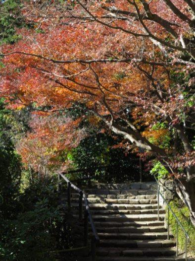 浄妙寺、喜泉庵裏手の紅葉。この階段をいくと石窯ガーデンテラスに至ります。