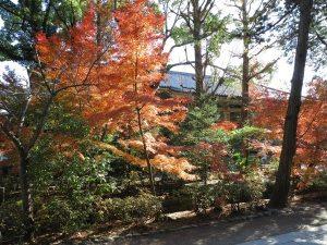 鶴岡八幡宮、鎌倉国宝館前の紅葉。小川が流れていて風情があります。