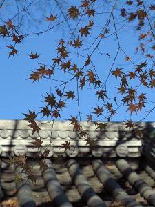 2014年12月18日、報国寺の紅葉。