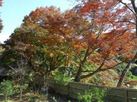 建長寺役寮あたりにあった石塔と紅葉。