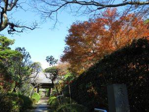 建長寺天源院の紅葉。