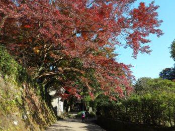 建長寺の紅葉。徐々に山深くなり、一層紅葉も魅力的になります。