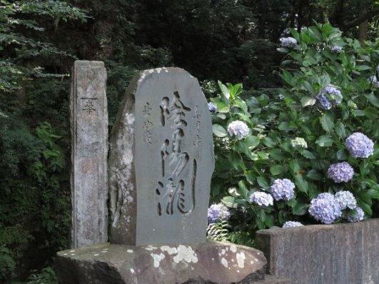 陰陽瀧の石碑の近くにはあじさいが咲きます。