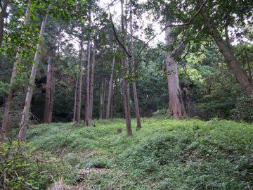 白山神社本堂周辺の平場。