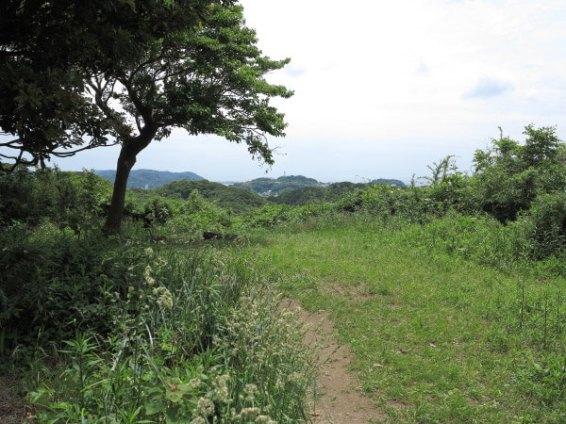 平成巡礼道。衣張山山頂を過ぎてまた平場があります。