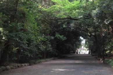 三嶋大社の社叢と覆う参道。