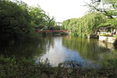 三嶋大社、大鳥居と総門の間にある神池が御殿への参道を挟んでいます。写真は向かって左手、厳島神社のある方です。