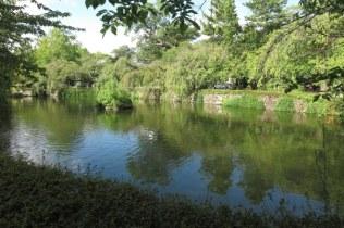 三嶋大社の神池(右側)。