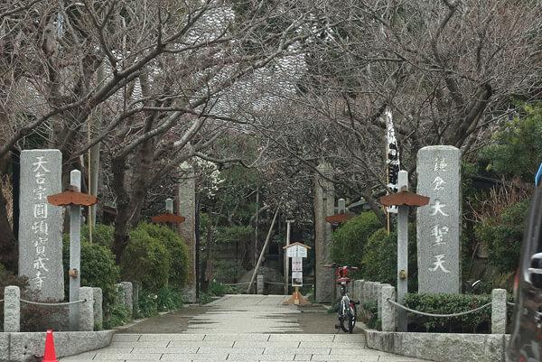 平成30年(2018年)2月23日(金)、宝戒寺の梅、並木の奥が梅です。