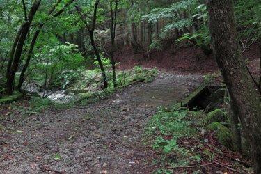 兜岩から試し切り石へと向かう鳥屋の沢林道。