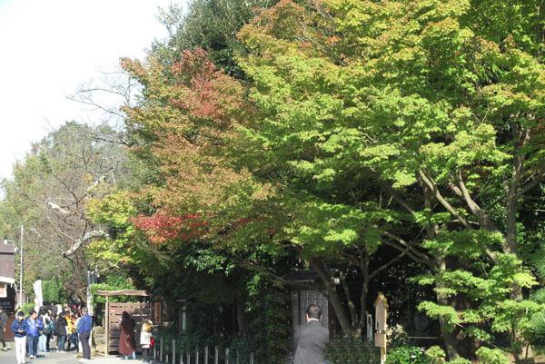 令和元年(2019年)11月1日、円覚寺の紅葉。