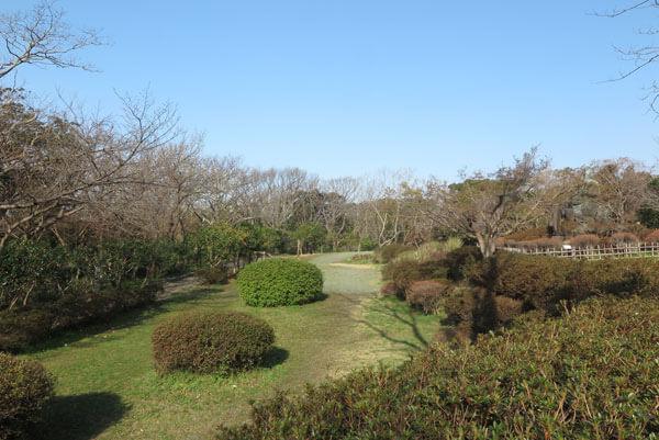 令和2年(2020年)3月19日、源氏山の桜。